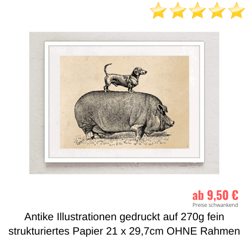 Illustration Schwein Dackel